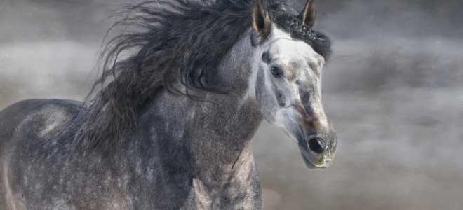 Лошади сивой масти