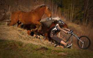 Конный спорт или велосипед? Что полезнее