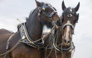 Сбруи для лошадей