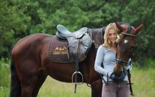 Как приручить лошадей к верховой езде