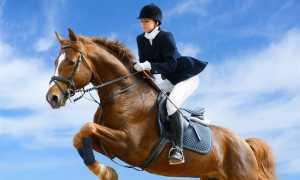 Советы по верховой езде на лошади для начинающих
