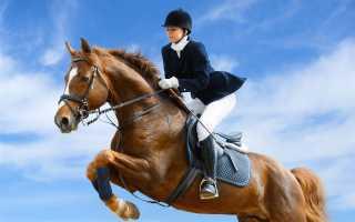 Обучение основам езды на лошадях