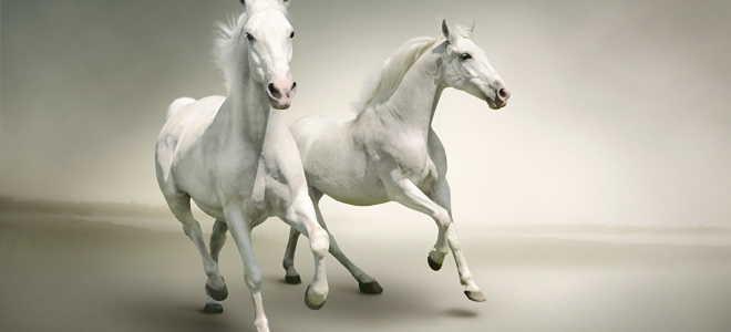 Необъезженные лошади