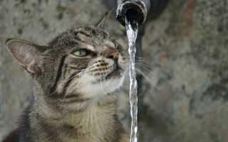 Сколько кошка должна пить?