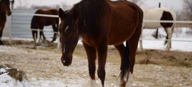Сап лошадей
