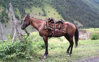 Албанская лошадь