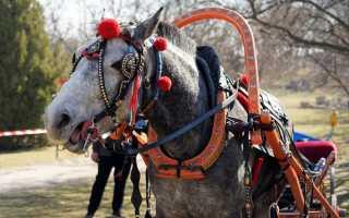 Хомут для лошади