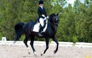 Выездково-полевая лошадь. История одной кобылы
