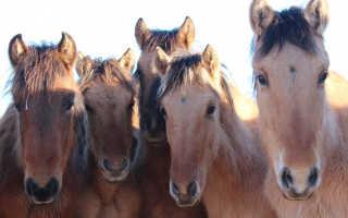 Как правильно выбрать лошадь на рынке?