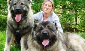 Крупные породы собак для содержания в квартире