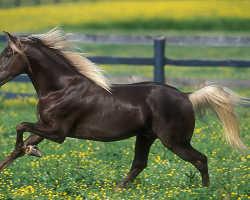 Лошади Скалистых гор