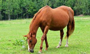 Беременность лошадей