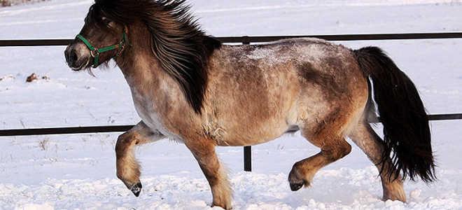 Якутская лошадь