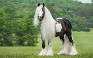 Лошади породы тинкер