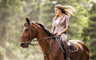 Как уверенно ездить на лошади верхом. 5 советов новичку
