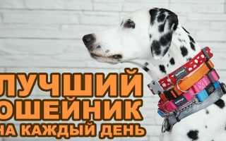 Как выбрать ошейник, чтобы собака была довольна? Ваша собака скажет WOW!