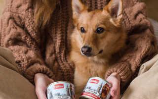 Консервы для собак — как выбрать?