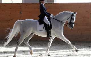 Выездковое седло для лошади