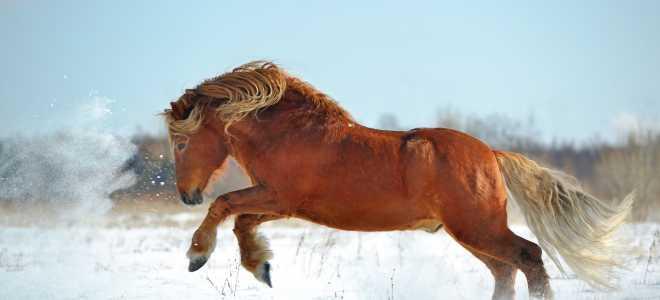 Cоветский тяжеловоз порода лошадей