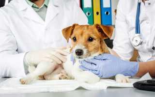 Что делать если ваш питомец захворал? Ветеринарная клиника