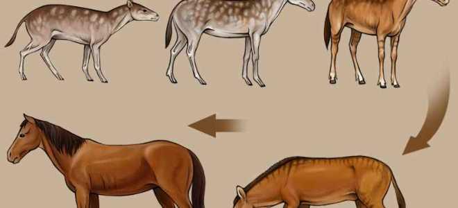 Филогенетический ряд лошади