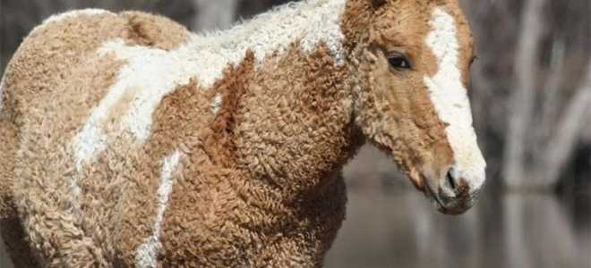 Забайкальская порода лошадей