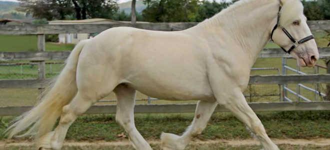 Кремовая порода лошадей