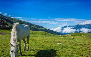 Рассказ о верховых прогулках по Гималаям.