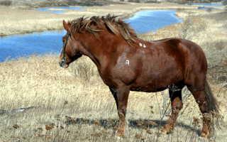 Лошади породы битюг