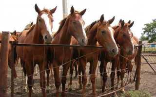 Русские породы лошадей