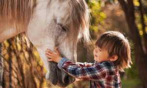 Про страх лошади у ребенка