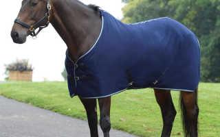 Одеяла для лошадей — зачем они нужны?