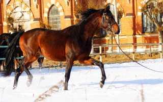Русские верховые  лошади