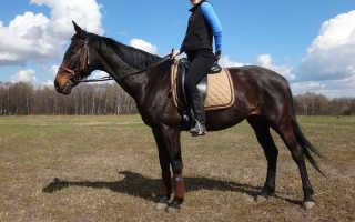 Как подобрать выездковое седло для лошади
