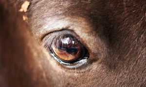 Глаз лошади