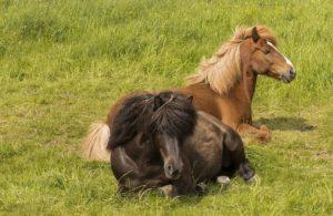 Сон лошади