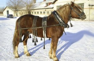 Конь в упряжи