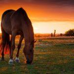 Лошадь беременная как называется