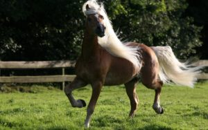 Грива лошади