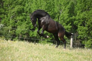 Кладрубский конь
