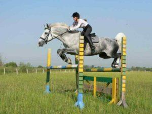 Конь породы орловский рысак