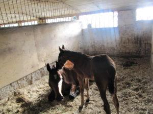 Загон для лошади