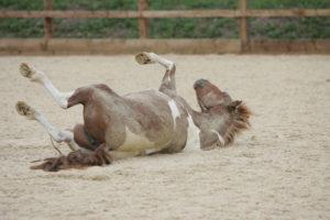 Болезнь лошади-колики