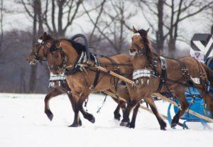 Вятские лошади