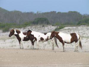 Пинто лошади