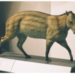 Эогиппус - предок домашних лошадей