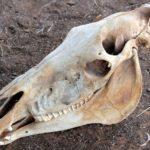 Анатомическое строение головы