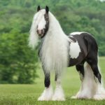 Лошадь с белой гривой и хвостом