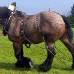 Крупнейший конь