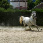 Лошадь светлого окраса бежит